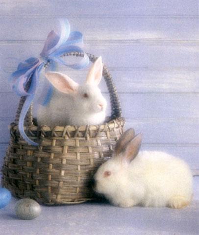 نوادر الصور Bunny-EasterBasket-WhiteRabbits