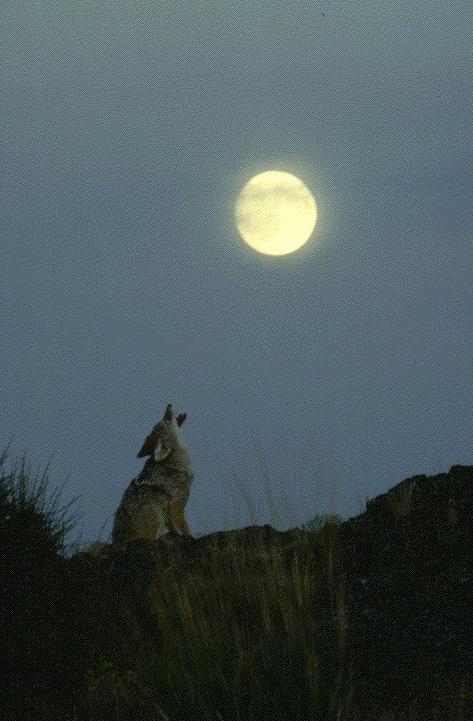 Index of /dirlist/coyote  Index of /dirli...