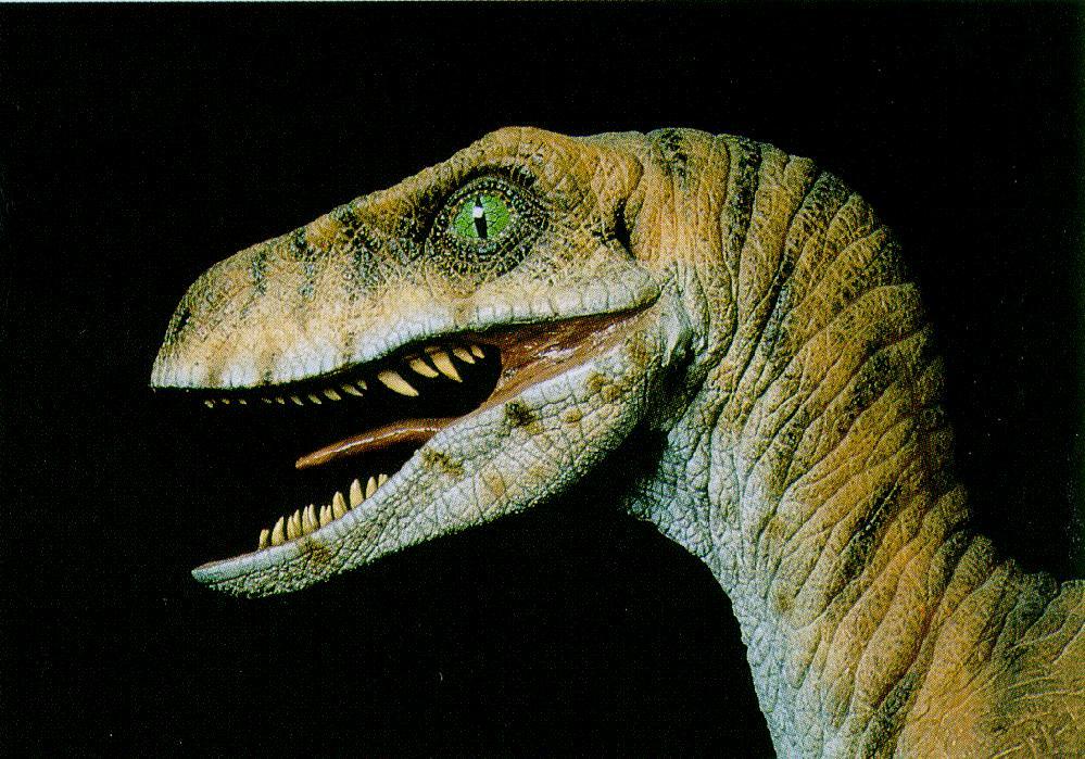 Velociraptor J01 Dinosaur Face