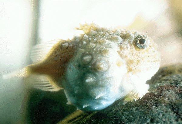 09320003-Fish.jpg