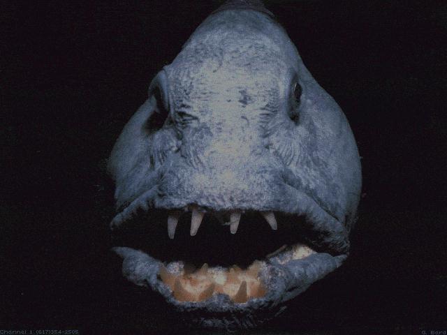 MonsterFish002.jpg