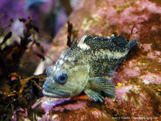 MontereyBayAquarium-6-fish.jpg