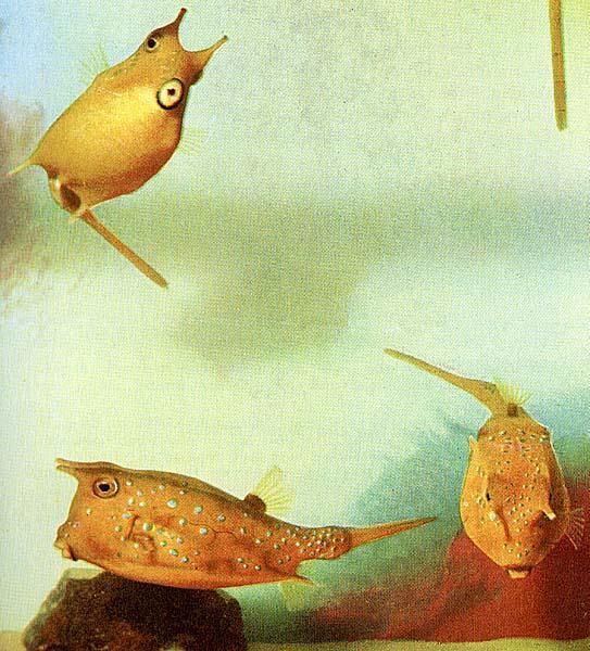 TropicalFish10-3YellowCowfishes.jpg