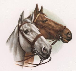 Vanderwal Blog Horses Head