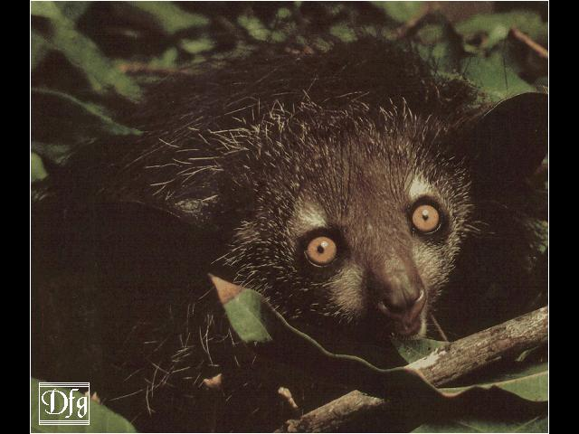Index of /dirlist/lemur