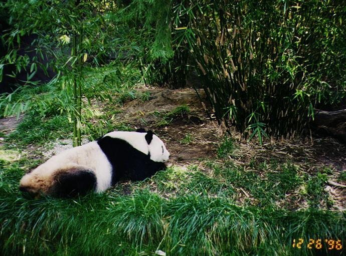 wwf panda forest - photo #39