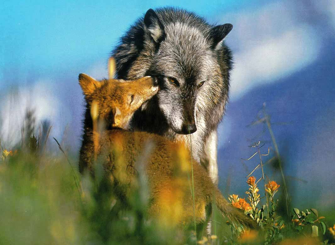 Love protective caring families wolves dangerous stories completely