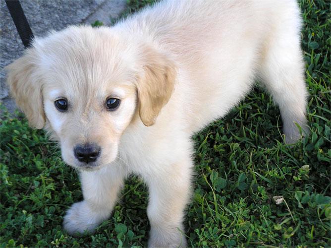 NOVA CREATiiONS    CHERRY    open 23-puppy