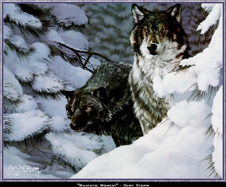 Wolf - Page 2 Wwart099-GrayWolf-2Wolves-Pair-InSnowPineForest